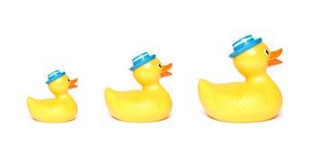 Three yellow toy ducks Stock Photo