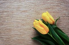 Yellow tulips. Valentine`s Day. Women`s Day.March 8. A horizonta Stock Photos