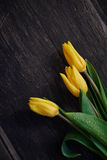 Three Yellow Tulips on Table Royalty Free Stock Image