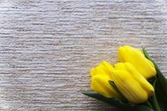 Three yellow tulips. Valentine`s Day. Women`s Day. Horizontal Sh stock photo