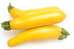 Three yellow zucchini squash Royalty Free Stock Photos