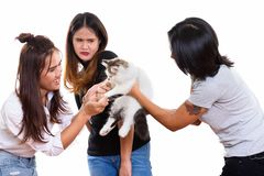 Three young Asian woman friends playing with cute cat with one f. Three young Asian women friends playing with cute cat with one friend looking scared royalty free stock image