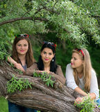 Three young beautiful ladies posing in the park Stock Photography