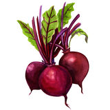 Three young beets isolated Royalty Free Stock Photos