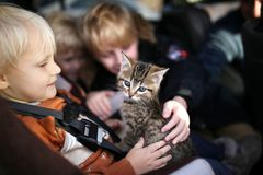 Little children sitting in car petting new baby kitten. Three young children, including a toddler in a carseat, are petting their newly adopted baby kitten Royalty Free Stock Image