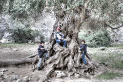 Three young children playing on a gnarled tree royalty free stock image