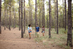 Three young friends exploring the woods Stock Photography