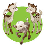 Three young goats Royalty Free Stock Photography