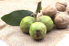 Three young green walnuts with a heap of dry brown Stock Image