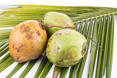 Three young and juicy organic green coconut on palm leaf Royalty Free Stock Photos