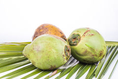 Three young and juicy organic green coconut on palm leaf Stock Image