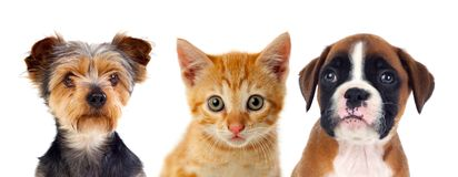 Three young pets Royalty Free Stock Image