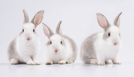 Three young rabbit Stock Image