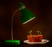Three Young Sprouts With Grow Lamp Stock Image