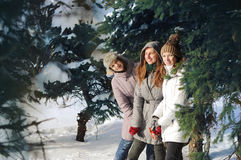 Three young among spruce brunches in winter stock photos