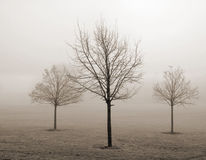Three young trees in the fog. Freezing fog conditions, winter 2006/2007, UK Stock Photos