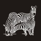 Three zebras royalty free illustration