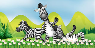 Three zebras in the flower field. Illustration Stock Photos