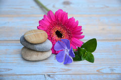 Three zen stones on old wood with purple ad pink  flower Royalty Free Stock Images