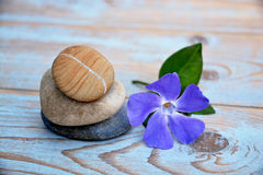Three Zen stones on used wood with purple flower Stock Photography