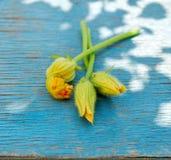 Three Zucchini Flowers Stock Photos