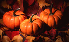 Threee Mini Pumpkins. Three pumpkins sit on a bed of leaves Royalty Free Stock Photography
