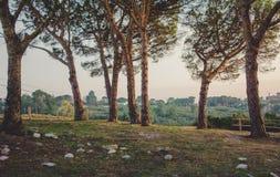 Threes avec le coucher du soleil Photos libres de droits