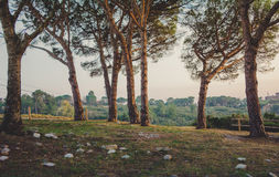 Threes con puesta del sol Fotos de archivo libres de regalías