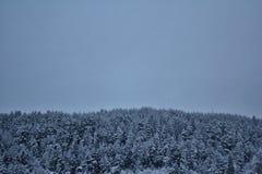 Threes en Norvège dans l'horaire d'hiver Images stock