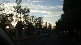 threes i solnedgången Arkivfoton