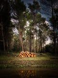 Threes im Wald lizenzfreies stockbild
