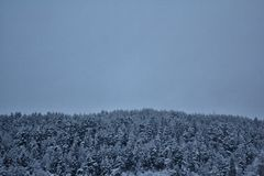 Threes w Norway w zima czasie Obrazy Stock