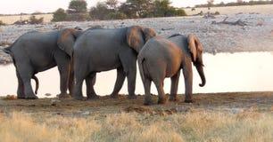 Threesome olifant royalty-vrije stock afbeelding