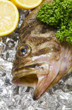 Threestripe rockfish Stock Photos