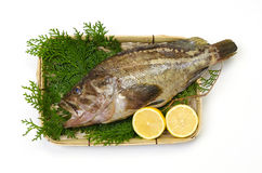 Threestripe rockfish Stock Images