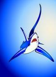 Thresha shark royalty free stock photography