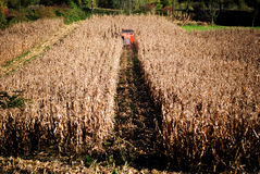 Thresher. In the field of corn in autumn Royalty Free Stock Photography