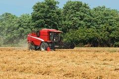 Thresher harvesting wheat Stock Photo