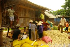 Threshing corn in Thai village Royalty Free Stock Photos