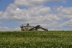 Threshing machine in bean field Stock Photo