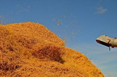 Threshing in Progress Stock Photo