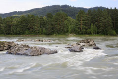 Thresholds and for rapid mountain river Katun. Stock Images