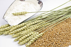 Thrice wheat Royalty Free Stock Image