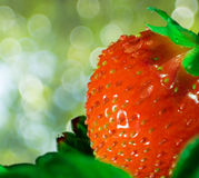 Thrickets d'une fraise Images libres de droits
