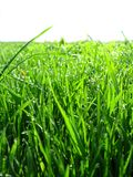 Thrickets of a high green grass Royalty Free Stock Images