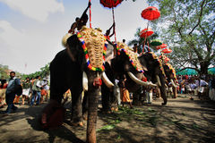 Thrissur Pooram. Decorated elephants stand in line for procession at Thrissur Pooram on May 12, 2011 in Thrissur, India. Thrissur Pooram is the most popular royalty free stock image