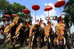 Thrissur Pooram. Decorated elephants stand in line for procession at Thrissur Pooram on May 12, 2011 in Thrissur, India. Thrissur Pooram is the most popular stock images