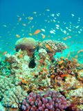 Thriving coral reef Stock Photos