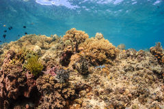 Thriving coral reef Stock Photography