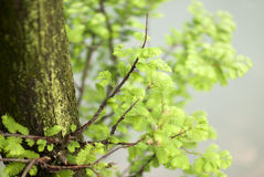 Thriving leaves and branches Royalty Free Stock Images